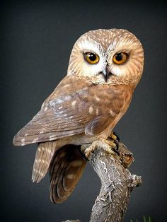 40 Far-Fetched Small Wood Carving Projects Holzschnitzen , 40 Far-Fetched Small Wood Carving Projects 40 Far-Fetched Small Wood Carving Projects. Tree Carving, Wood Carving Art, Wood Art, Owl Photos, Owl Pictures, Owl Bird, Pet Birds, Saw Whet Owl, Wood Owls