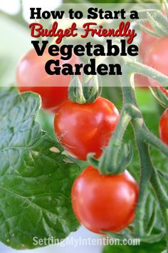 Do you want to start a garden, but money is holding you back? Here are some ideas for starting a vegetable garden when you're on a tight budget.