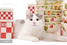 PortForLio - Cat - kitten in studio with red