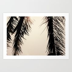 Palm Tree dreams Art Print Promoters - $17.00 Dream Art, Palm Trees, Dreams, Art Prints, Photography, Editorial Design, Palm Plants, Art Impressions, Photograph