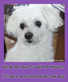 Maltese Dogs Quotes so true, cute and/or funny! The dog quotes to make you smil Dogs Quotes so true, cute and/or funny! The dog quotes to make you smile Funny Sign Fails, Dog Quotes Funny, Funny Animal Memes, Funny Signs, Bichon Dog, Maltese Dogs, Funny Animals With Captions, Funny Pictures With Captions, Jokes For Teens