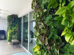 This green wall is located at the balcony of a private residence located at Costa del Este, Panama City. The wall consists in two sections which creates an harmonious combination of different species, bringing the nature into the house.