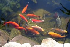 adding a pond to your yard attracts , dragonflies, chipmunks, frogs and birds ...