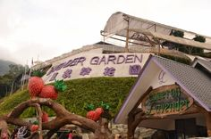 Cameron Highlands Tourist Attraction see more - http://www.joy-travels.com/city/malaysia #cameronhighlands #malaysia