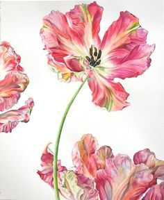 Parrot Tulip     Rosie Sanders Mixed Media