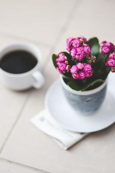 Free download of this photo: https://www.pexels.com/photo/pink-kalanchoe-6074 #coffee #flowers #flower