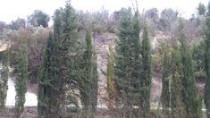 Algunas escenas de un fin de semana en un pueblecito de la Sierra de Segura. #sierra #yeste #lagraya #río #aceituna #piedrabruja #elrincondelaly #herbolarioonline elrincondelaly.com