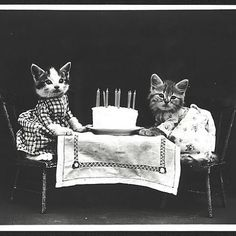 Cuteness overload!  Photographer Harry Whittier Frees became famous for his pictures of adorable animals dressed as people in the early 1900s thru 1940s. You can see all his images for free at the Library of Congress: http://ancstry.me/1QlMQZz  Photo cour