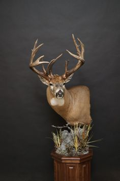 Whitetail Deer Pictures, Whitetail Deer Hunting, Coyote Hunting, Pheasant Hunting, Whitetail Bucks, Archery Hunting, Hunting Wallpaper, Deer Head Decor, Taxidermy Decor