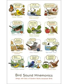 Learn bird sounds with this Bird Sound Mnemonics print (Eastern edition). Comes in two sizes! Bird & Moon.