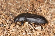 23 Best The Beetles! images in 2016 | Beetle, Insects, Bugs