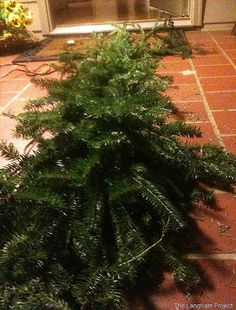 Learn how to make a Christmas garland with live greenry.