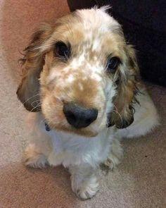 Cute Toby.