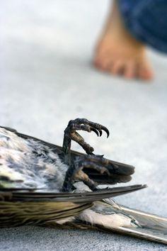 """""""One Dead Bird""""  Lauren Fisher's blog: Sparkling Adventures"""
