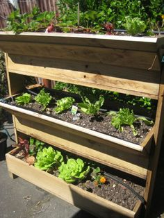 vertical gardening - another form of container gardening...