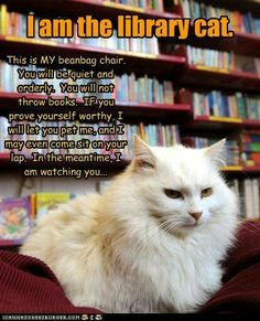 Library cat. Everyone needs one. And everyone needs a library, too!