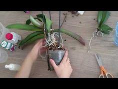 YouTube Orchid Care, Garden Plants, Garden Landscaping, Flower Power, Diy And Crafts, Backyard, Landscape, Flowers, Gardening