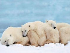 Spooning with unity is powerful | Bears :) | Pinterest