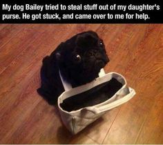 Most adorable thief ever.