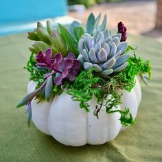 Learn step by step how to easily make a beautiful succulent topped pumpkin. The best part is that it can last for months until you plant the succulents. Succulent Centerpieces, Pumpkin Centerpieces, Succulent Arrangements, Hanging Succulents, Succulents Diy, Succulents Painting, Succulents Wallpaper, Succulents Drawing, Pumpkin Arrangements