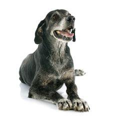 Mi perro está mayor - Barkibu ES