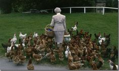 The inspiring Duchess of Devonshire and her chickens @kathleen Bragg
