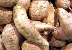 Growing Sweet Potatoes. Need full sun, well-drained soil (preferably sandy loam) & plenty of room to thrive. Set root bearing stems, i.e., slips, 1ft apart in rows spaced 3ft apart. In raised beds, space 1-1/2 ft apart. Use row covers to add extra heat & keep out pests. Harvest before frost, after foliage starts to yellow. Use damaged potatoes asap. Cure healthy potatoes for 2wks in warm place. Allow 70-100 days to reach maturity.