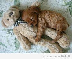 teddy bear spoon.