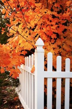 I Love how a white picket fence looks against the Autumn colors!!