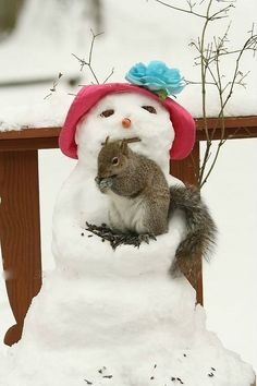 Adorable squirrel nesting in a snowman in winter snow
