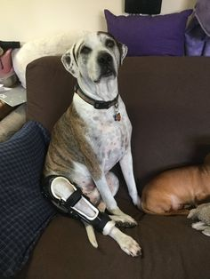 Sophie Is An Orthopets Patient Who Lives In Canada Sophie