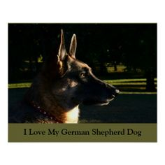 Huge poster for only $8.78!!!!  Get it framed for only $13.00 more!!!  Sale ends tonight!!!!German Shepherd