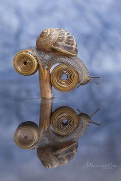 Фотография Snail in blue автор Olga Viarenich на 500px