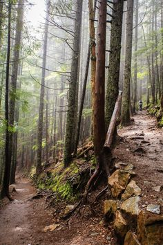 Mt. Si Trail / Time to go for a hike!
