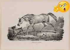 "This mid 19th century black and white lithograph after a drawing by Carle Vernet depicts "" #Cheval en Liberte"". Printed by Delpech, from Divers Croquis de Chevaux..."