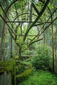 Jugendstil Design, Theme Nature, Nature Aesthetic, Foto Art, Environment Concept Art, Fantasy Landscape, Dream Garden, Abandoned Places, Mother Nature