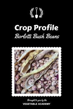 The Vegetable Academy will equip you with the tools, methods, and resources you need to grow your own food. Cranberry Beans, Bush Beans, Online Classroom, Tool Sheds, Grow Your Own Food, Urban Farming, Growing Vegetables, Gardening Tips, Frozen