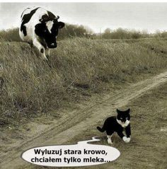 Funny Animal Captions When Nursery Rhymes Bad The Writer Advice Animal Captions, Funny Animals With Captions, Funny Animal Pictures, Hilarious Animals, Funny Cute, Funny Shit, The Funny, Funny Memes, Funny Ads