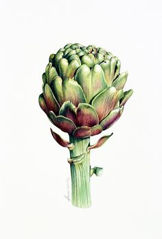 artichoke tattoos - Google Search