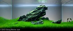 2012 AGA Aquascaping Contest - Entry #189 by Georg Werner Just