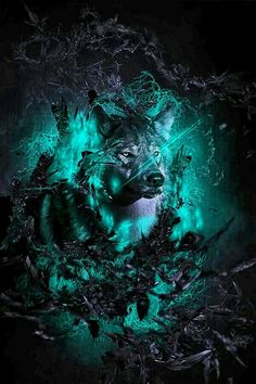 Dessins loup
