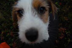 Albert Dogs, Animals, Animaux, Doggies, Animal, Animales, Pet Dogs, Dog, Animais