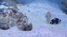 рыбки плюются песком