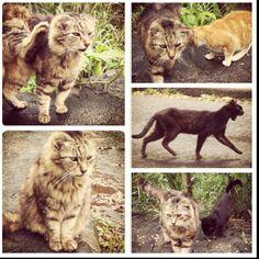 Wild cats of Iao Valley, Maui.