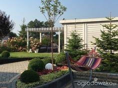 Any ogród mały czyli wygrana walka z ugorem - strona 2331 - Forum ogrodnicze - Ogrodowisko