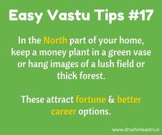 Vastu tip: i the North part of your home, keep a money plant i a green vase Feng Shui Basics, Feng Shui Tips, Fen Shui, Feng Shui House, Money Plant, Puja Room, Vastu Shastra, Indian Homes, Smart Home