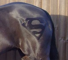 Stallion ?? :)