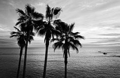 Black and white beach photography. Sunset by ClearFrameGallery