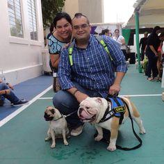 Friends capo bulldog