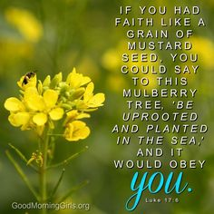 """If you had faith like a grain of mustard seed, you could say to this mulberry tree, """"Be uprooted and planted in the sea,"""" and it would obey you. Luke 17:6"""